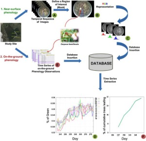 Overview upon data integration and time series extraction from near-surface images and on-the-ground phenological observations